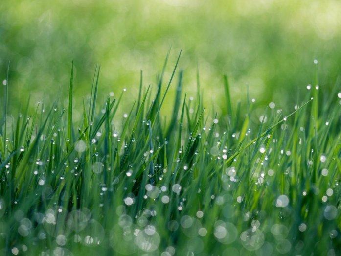 wandelen regen