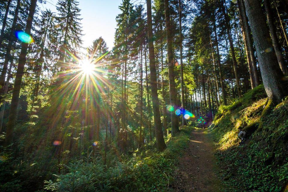 noordelijke zwarte woud