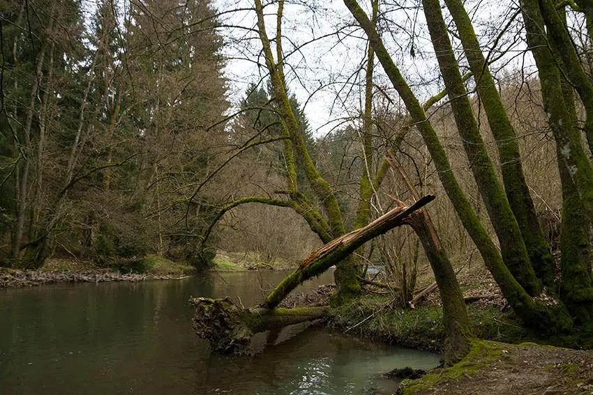 Traumhafte Flusslandschaft auf der 3. Etappe des Lieserpfads.