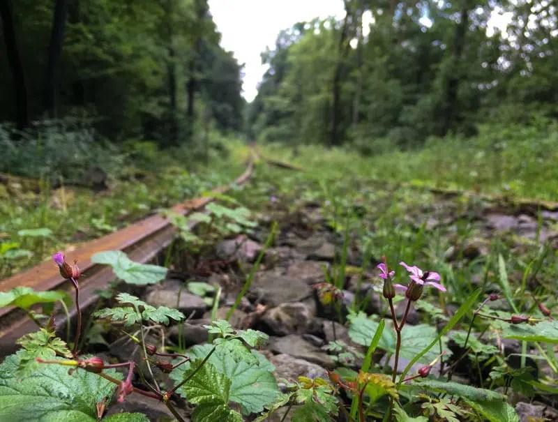 Bahnstation im Wald