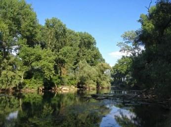 Am Lingenfelder Altrhein
