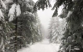 Mystischer Nebelwald