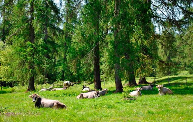 laerchenwald