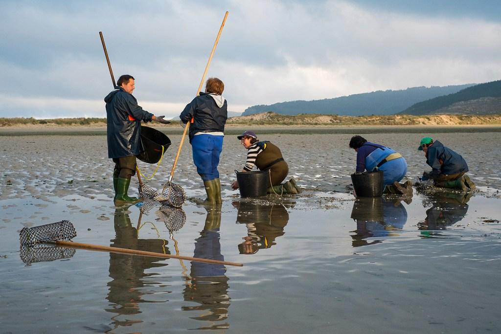 Un grupo de mariscadoras en Galicia