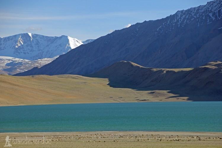 Kyagar Tso, Korzok Ladakh