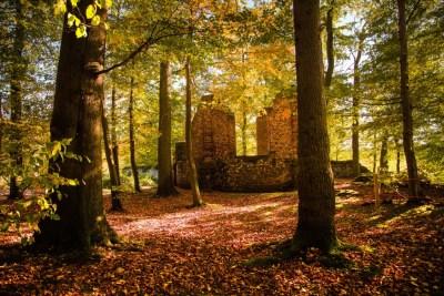 Abdij van Villers - ruïne in het bos - HDR