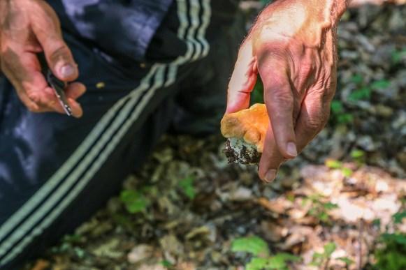 Bosnie - paddenstoelen - Foca - Lola-5