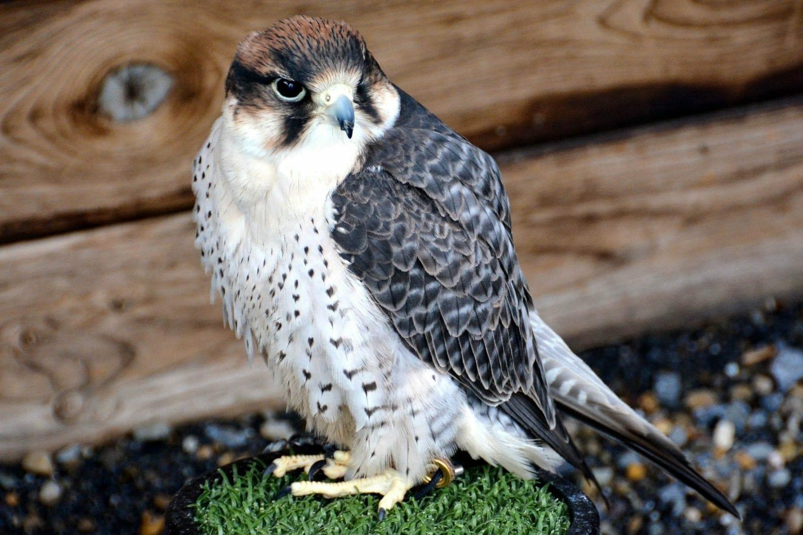 Ireland bird