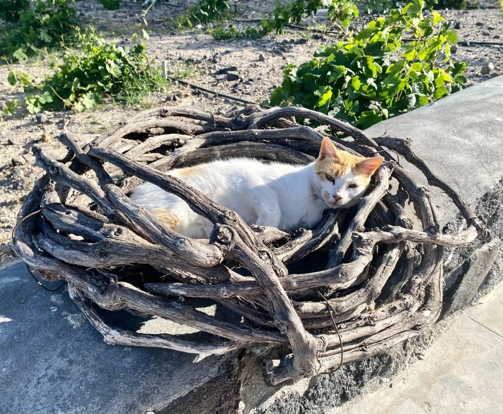 Kitty in Vines