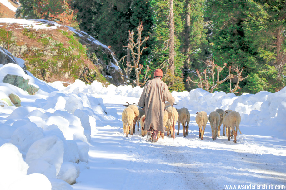 Life in Kashmir - Is it safe to travel to Kashmir