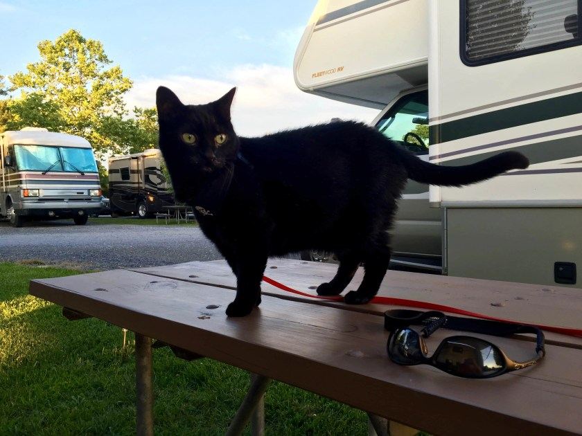 Alee the Camping Kitty