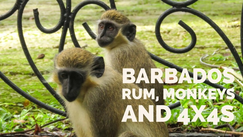 Barbados Rum, Monkeys and 4x4s