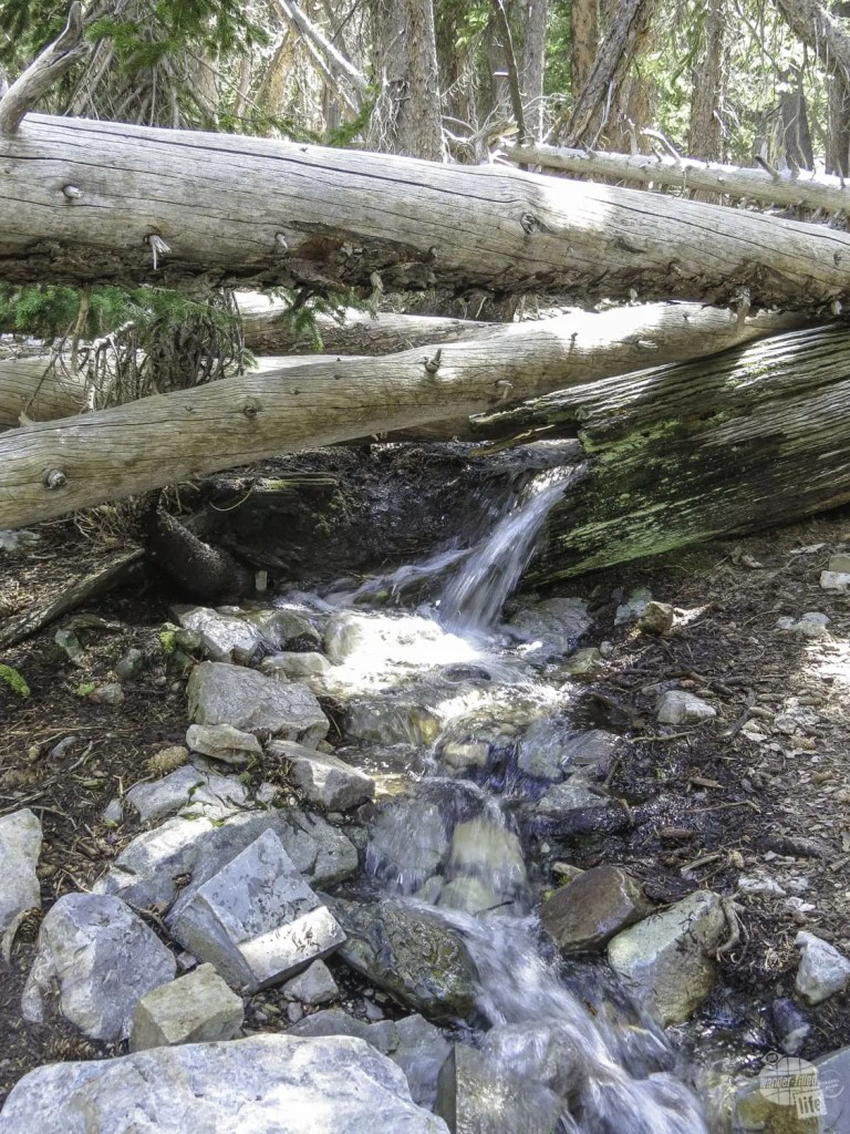 The stream takes over a log in Great Basin NP.