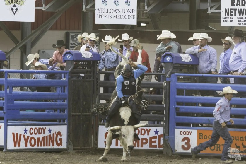 Bull rider at the Cody Stampede