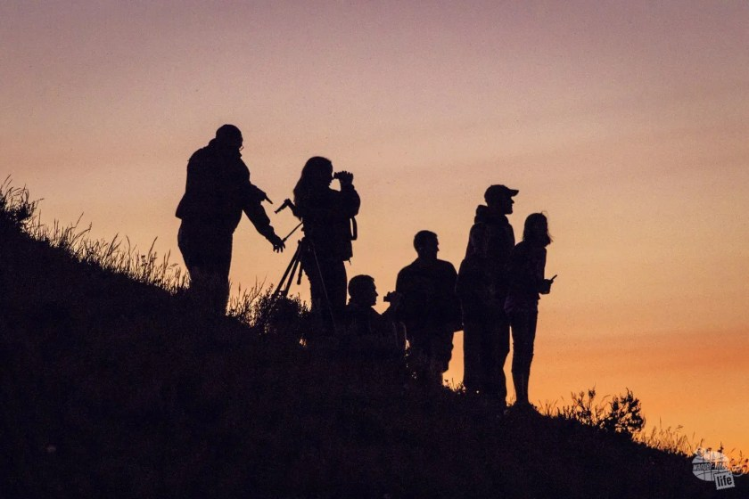 Folks looking for wolves in Hayden Valley, Yellowstone National Park