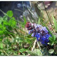Wanderung im Tösstal, Dienstag, 25. April 17