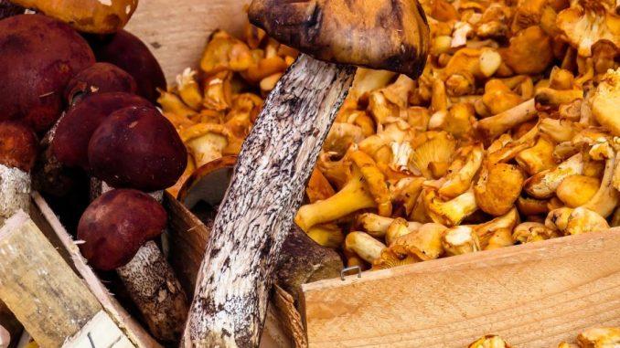 Pilze Rezepte und Zubereitung