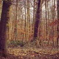 Sa., 19.01.2019 Gemütliche Halbtages-Wald-Wanderung im Zürcher Unterland
