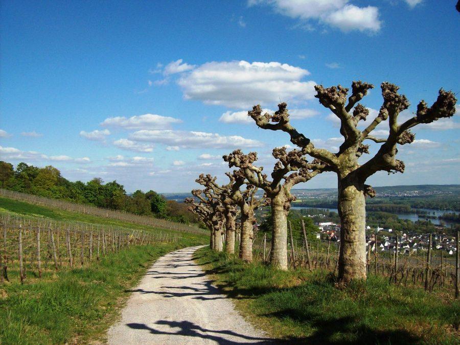 Sa. 30. 03. 19 – Rhein-Reben-Tour im Naturpark Schaffhausen
