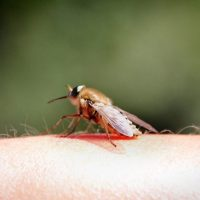 Insektenstiche und kleine Wunden unterwegs richtig behandeln