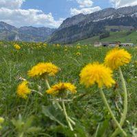 Neues Datum für unsere Wanderung im Appenzellerland: Pfingstmontag