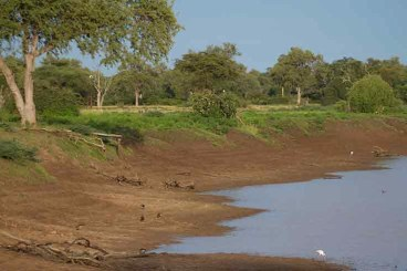 Riviere South Luangwa
