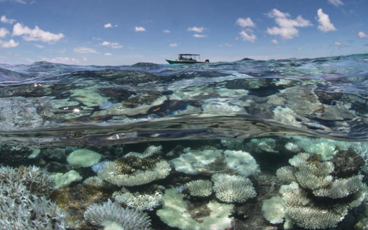 Biała rafa koralowa na Malediwach
