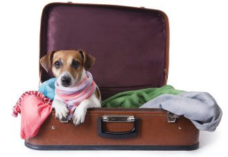 international pet travel
