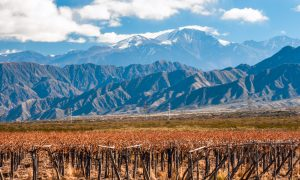 Argentina Wine Country