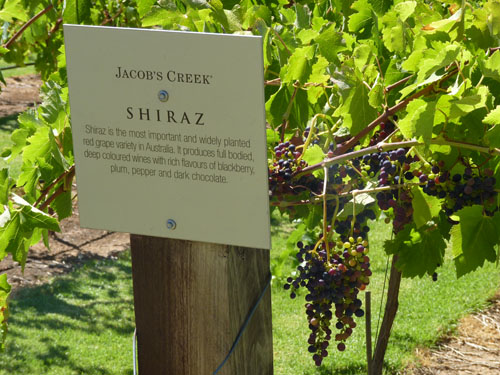 Jacobs Creek Winery, Barossa Valley