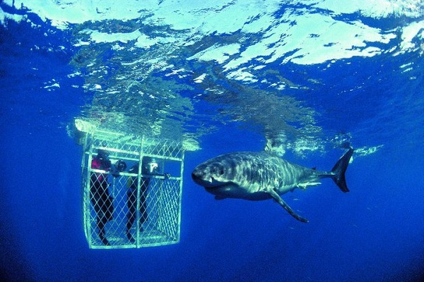 Travel To South Africa - Shark Cage Diving, South Africa