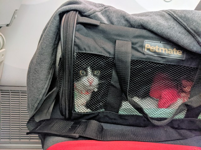 Pet home from Bali