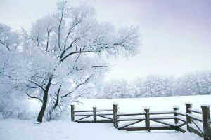 winter homesteading chores and projects