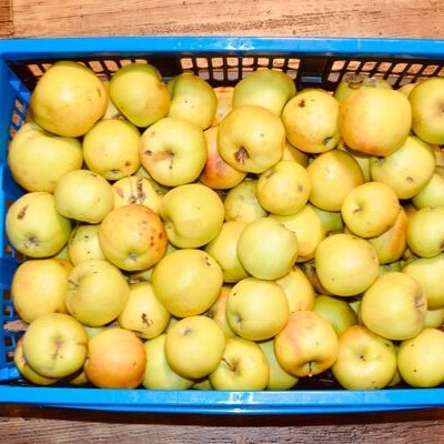 crate of apples ready for preserving
