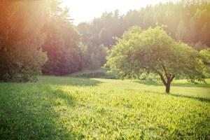 farm field and sunshine,