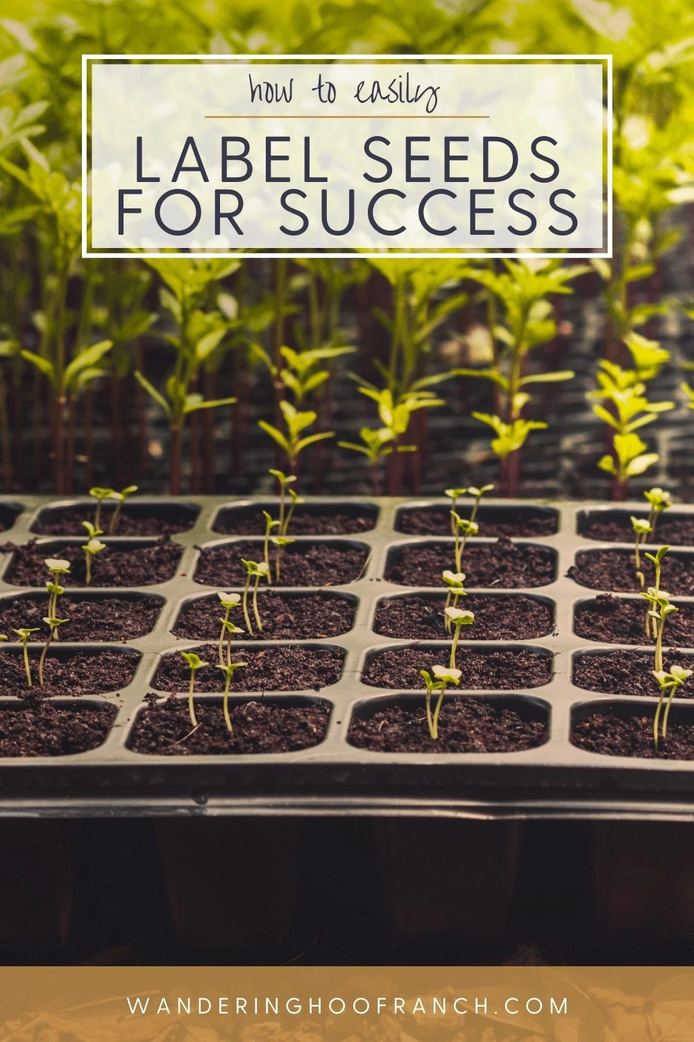 how to easily label seeds for success. seed starting tray with growing seeds and no labels.