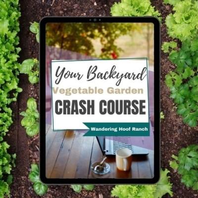 backyard vegetable garden crash course