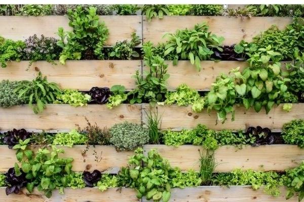 vertical garden wall of plants and herbs growing between horizontal boards
