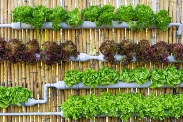 vertical garden fence