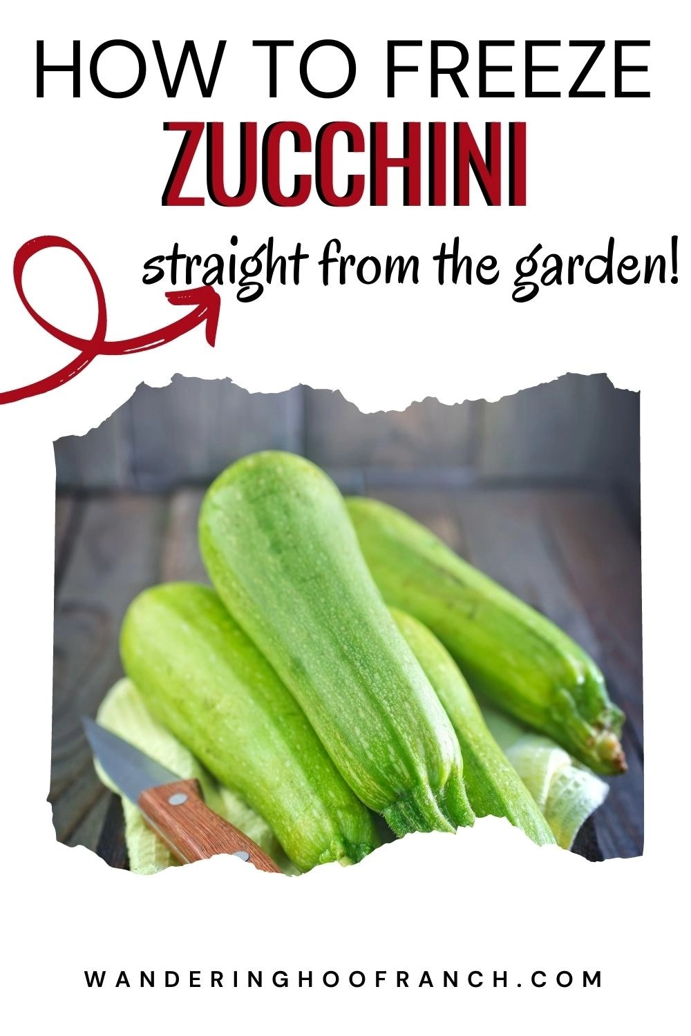 Can you freeze zucchini straight from the garden? Of course you can, learn just how easy it is to freeze shredded zucchini and squash for baking recipes, soup, casserole and more without blanching!