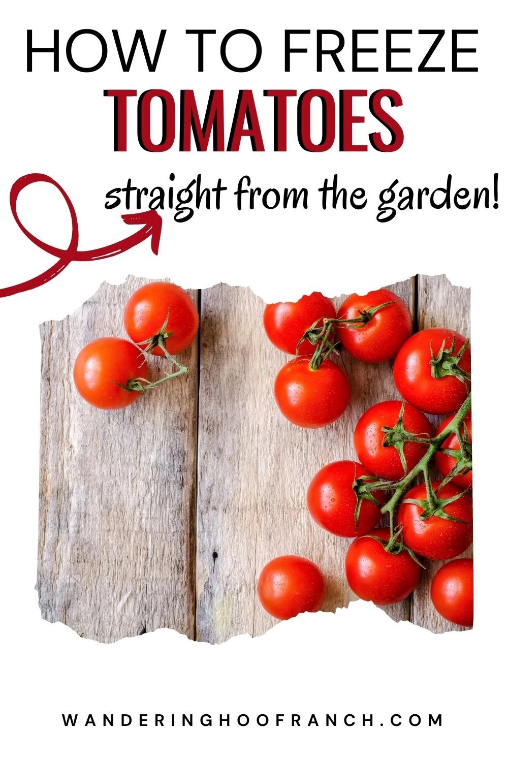 how to freeze tomatoes straight from your garden with an arrow