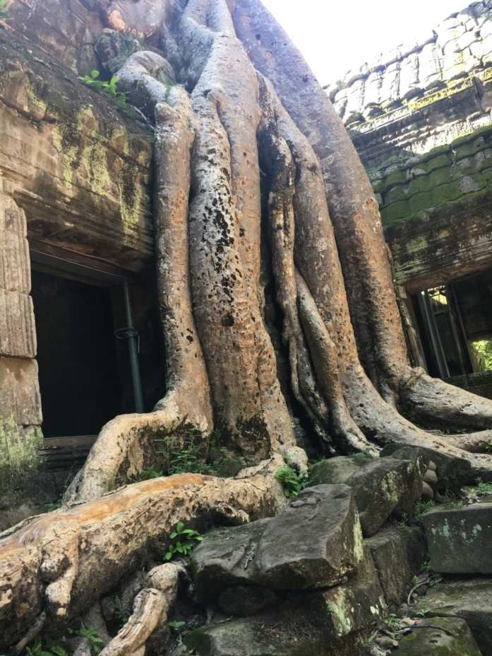 The roots of Ta Phrom
