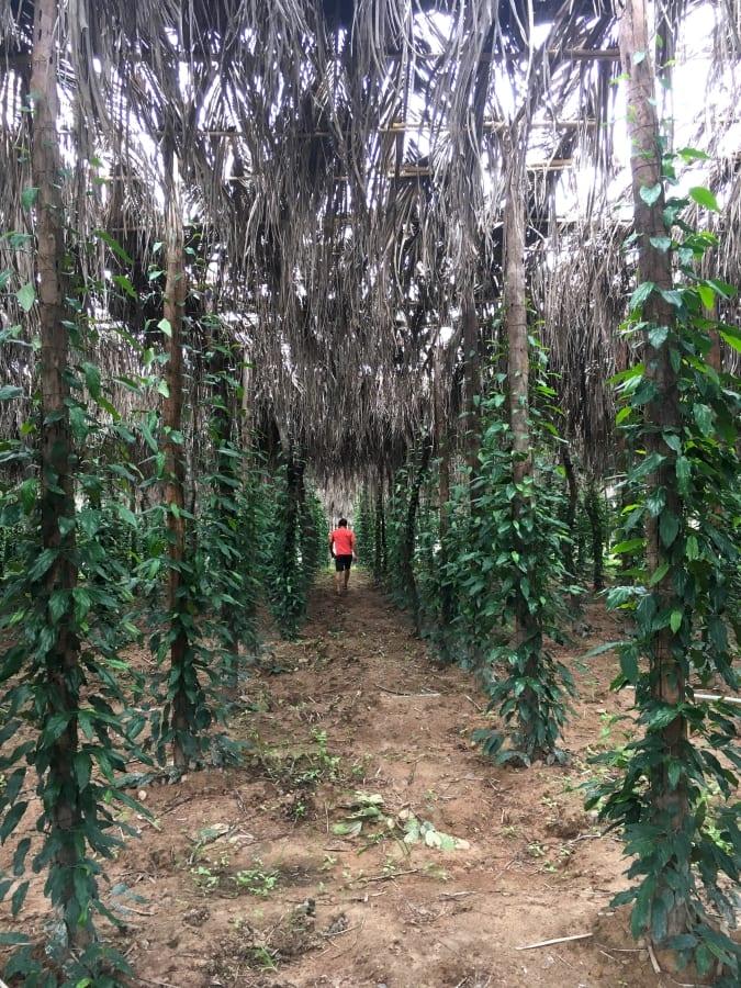 Walking through La Plantation