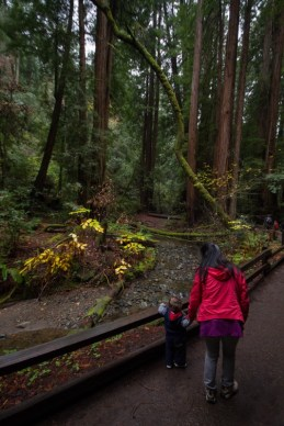 Mother and son look at creek in Muir Woods National Monument