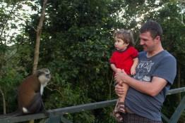 Introducing the Mona monkeys
