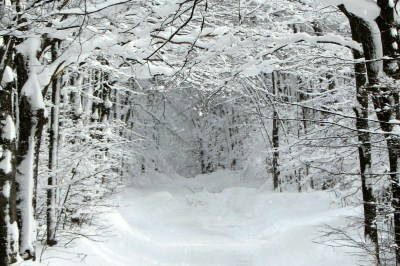 Snow covered trees - Skiing North Michigan