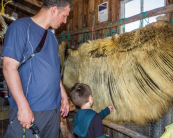 A man looks on as a young boy examines whale baleen in a fishing shed - Icebergs in Twillingate