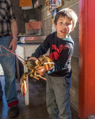 a young boy makes a funny face while holding a large lobster in a fishery - Icebergs in Twillingate