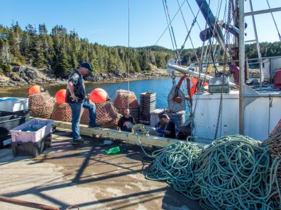 crab fishermen load their boat - Icebergs in Twillingate