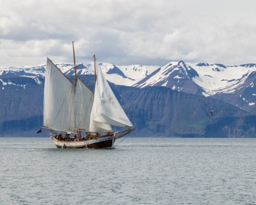 A schooner sails beside snow capped mountains in Iceland - An Epic 14 Day Iceland Itinerary